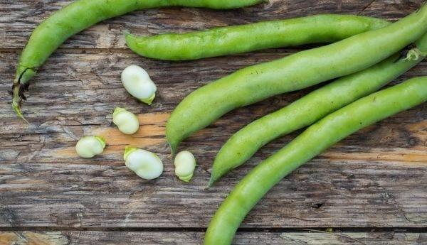 Fava Beans Supplier